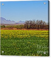 Arizona Spring Acrylic Print by Methune Hively
