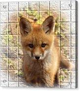 Artistic Cute Kit Fox Acrylic Print by Thomas Young