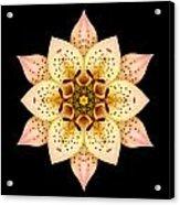 Asiatic Lily Flower Mandala Acrylic Print by David J Bookbinder