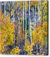 Aspen Tree Magic Cottonwood Pass Acrylic Print by James BO  Insogna