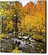 Aspens At Bishop Creek Acrylic Print by Cat Connor