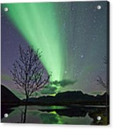 Auroras And Tree Acrylic Print by Frank Olsen