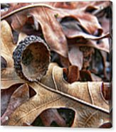 Autumn Acorn And Oak Leaves Acrylic Print by Jennie Marie Schell