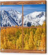 Autumn Aspen Tree Forest Barn Wood Picture Window Frame View Acrylic Print by James BO  Insogna