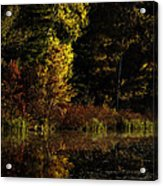 Autumn At It's Finest Acrylic Print by Thomas Young