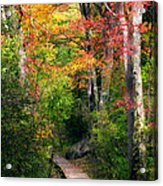 Autumn Boardwalk Acrylic Print by Bill Wakeley