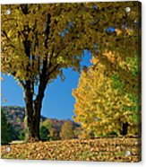 Autumn Colors Acrylic Print by Brian Jannsen