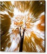 Autumn Explosion Acrylic Print by Dave Bowman