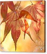 Autumn Glow Acrylic Print by Anne Gilbert