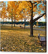 Autumn In Calgary Acrylic Print by Trever Miller