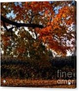 Autumn In The Country Acrylic Print by Inspired Nature Photography Fine Art Photography