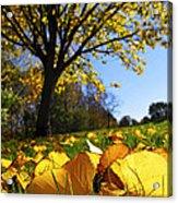 Autumn Landscape Acrylic Print by Elena Elisseeva