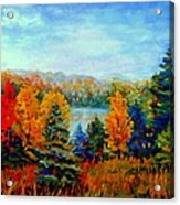 Autumn Landscape Quebec Red Maples And Blue Spruce Trees Acrylic Print by Carole Spandau