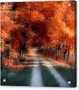 Autumn Lane Acrylic Print by Tom Mc Nemar