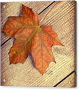 Autumn Leaf Acrylic Print by Amanda And Christopher Elwell