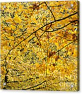 Autumn Leaves Acrylic Print by Michal Boubin