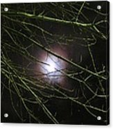 Autumn Moon Peeks Through The Branches Acrylic Print by Guy Ricketts