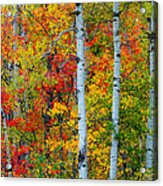 Autumn Palette Acrylic Print by Mary Amerman