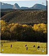 Autumn Pastures Along The Virgin River Rockville Utah Acrylic Print by Robert Ford