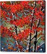 Autumn Reflections Acrylic Print by Janine Riley