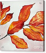 Autumn Acrylic Print by Shannan Peters