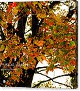 Autumn Smile Acrylic Print by Jaime Lind