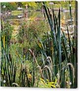 Autumn Swamp Acrylic Print by Bill Wakeley