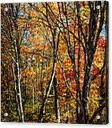 Autumn Trees Acrylic Print by Elena Elisseeva