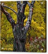 Autumn Trees3 Acrylic Print by Vladimir Kholostykh