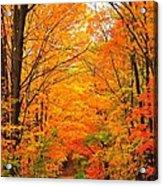 Autumn Tunnel Of Trees Acrylic Print by Terri Gostola