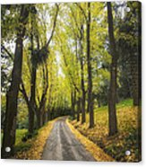 Autumns Day Acrylic Print by Kim Andelkovic