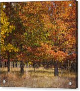 Autumn's Miracle Acrylic Print by Jeff Swanson