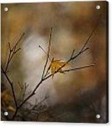 Autumns Solitude Acrylic Print by Mike Reid