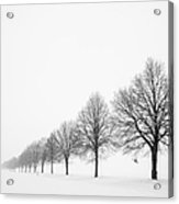 Avenue With Row Of Trees In Winter Acrylic Print by Matthias Hauser