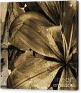 Awed V Acrylic Print by Yanni Theodorou