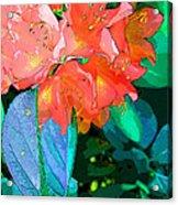 Azealia Acrylic Print by Laura Sapko