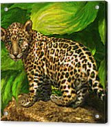 Baby Jaguar Acrylic Print by Jane Schnetlage
