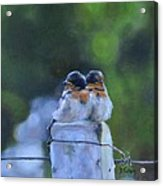 Baby Swallows On Post Acrylic Print by Donna Tuten