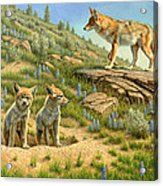 Babysitter  -  Coyotes Acrylic Print by Paul Krapf