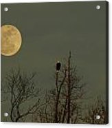 Bald Eagle Watching The Full Moon Acrylic Print by Raymond Salani III