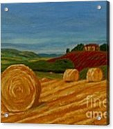 Field Of Golden Hay Acrylic Print by Anthony Dunphy