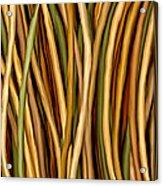 Bamboo Canes Acrylic Print by Brenda Bryant