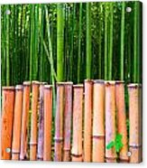 Bamboo Fence Acrylic Print by Julia Ivanovna Willhite