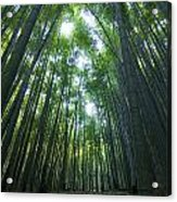 Bamboo Forest Acrylic Print by Aaron S Bedell