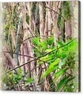 Bamboo Forest At Lamma Island Hong Kong Acrylic Print by Yury Malkov