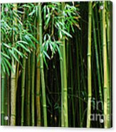 Bamboo Forest Maui Acrylic Print by Bob Christopher