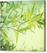 Bamboo In The Sun Acrylic Print by Priska Wettstein