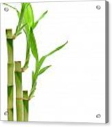 Bamboo Stems In Black Vase Acrylic Print by Olivier Le Queinec
