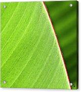 Banana Leaf Acrylic Print by Heiko Koehrer-Wagner