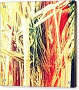 Banyan Tree Acrylic Print by Chris Andruskiewicz